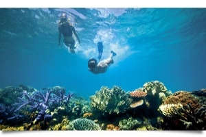 Here is your chance to experience the best of The Great Barrier Reef!
