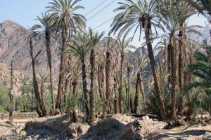 قرية (وادى فيران) في سيناء.. سياحة دينية بامتياز